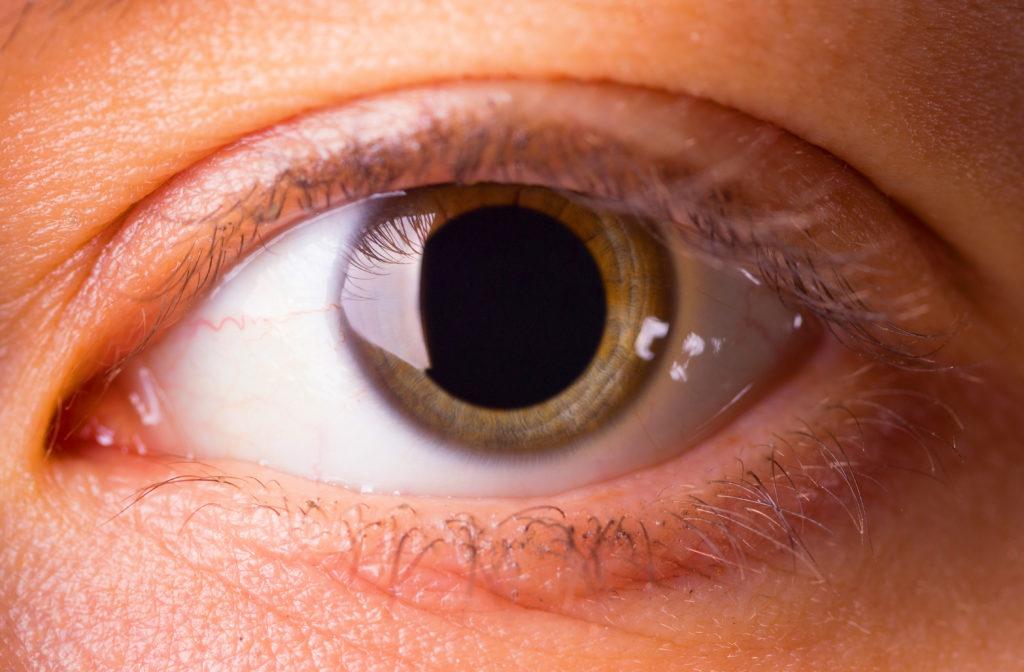 optometrist safford az